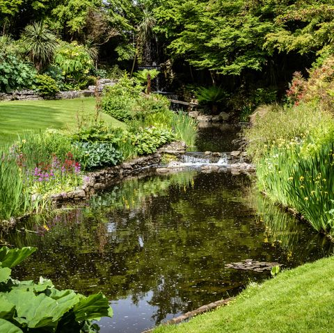 UK Gardeners Are Being Urged To Bring Back The Garden Pond ... on natural looking bird baths, natural looking fencing, natural looking pond liners, natural looking waterfalls, natural looking porches, natural looking retaining walls,