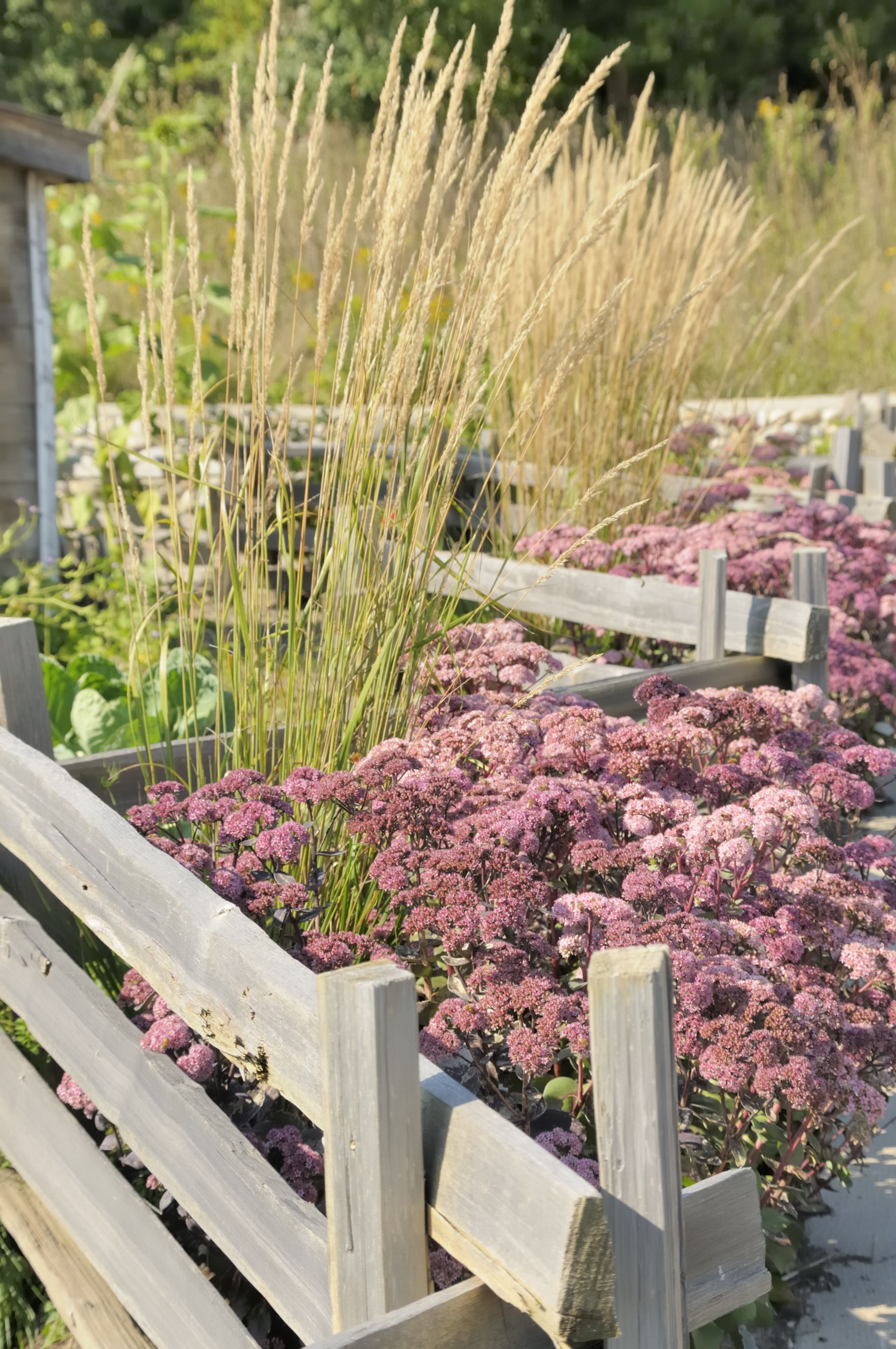 19 Practical And Pretty Garden Fence Ideas Best Materials To Fence