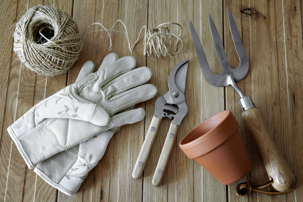 Food Gardening for Beginners