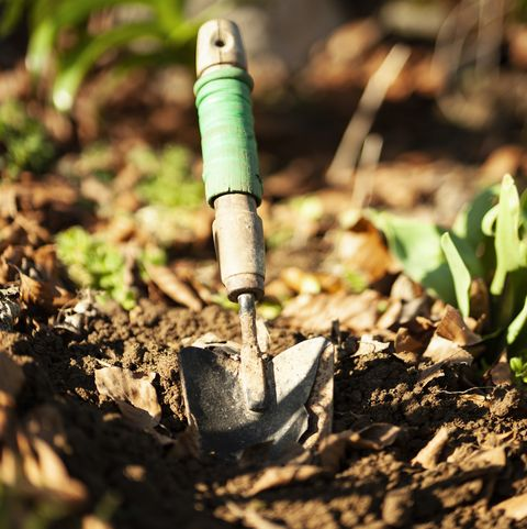 4 garden trends for summer 2021