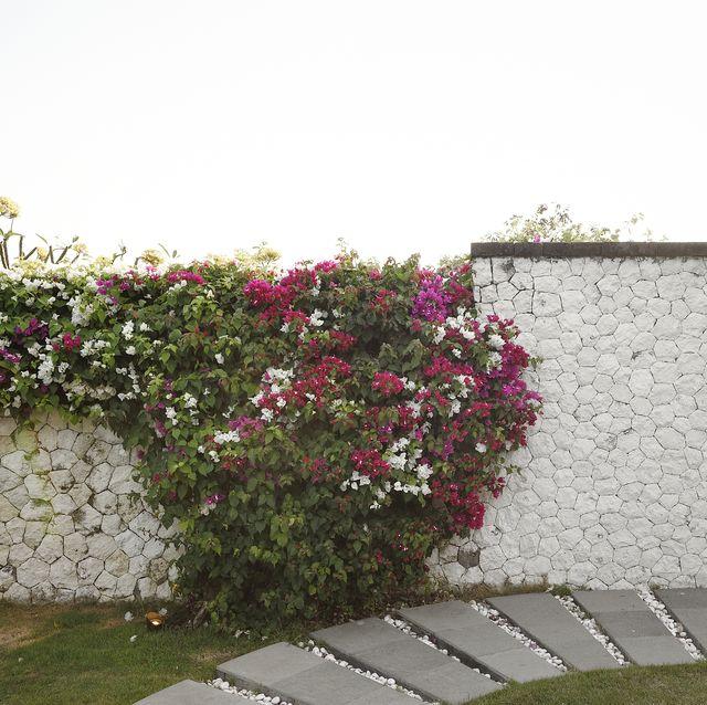 garden wall ideas