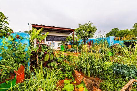CAMFED garden