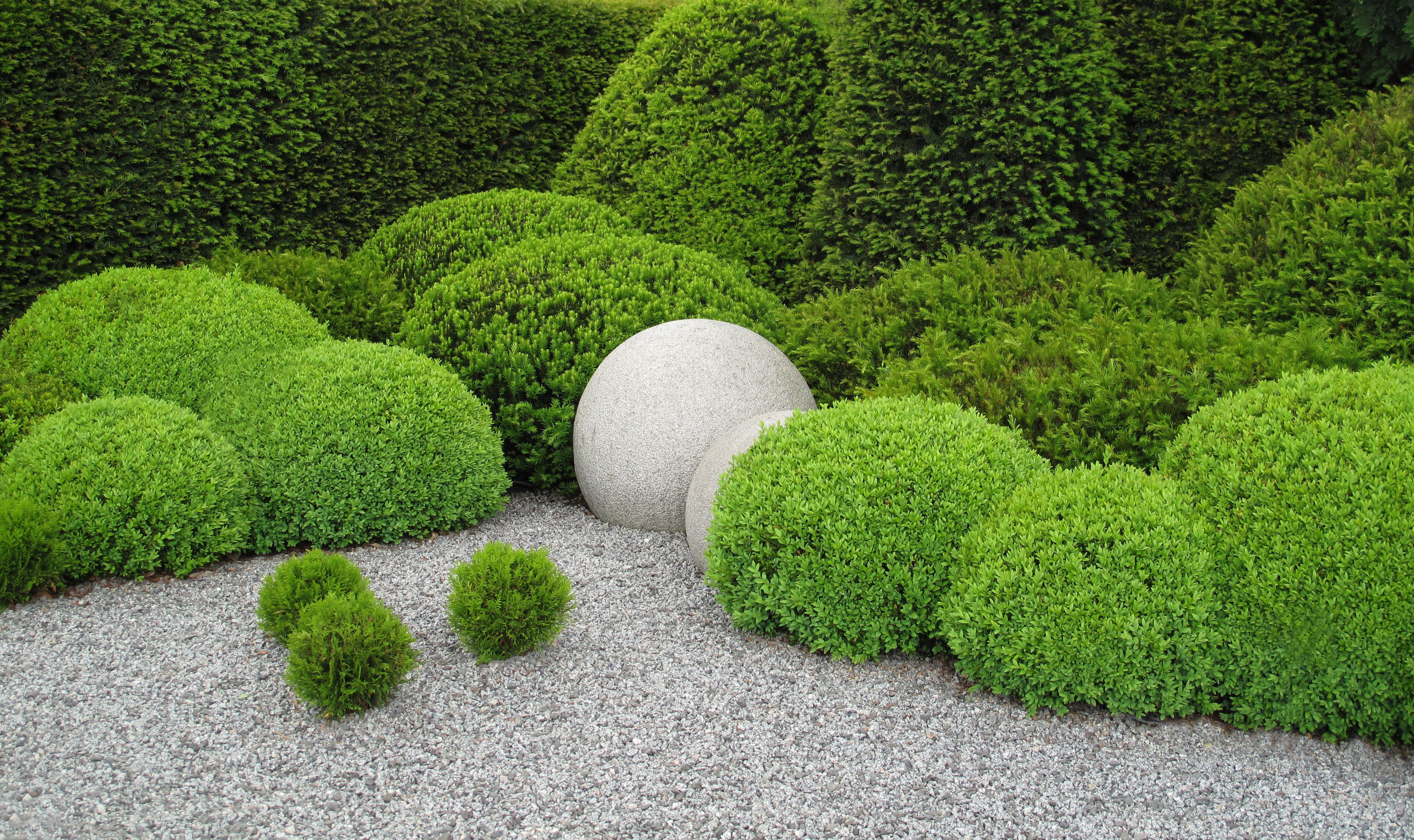 20 Best Boxwood Shrubs to Plant - Boxwood Bush and Hedge Ideas