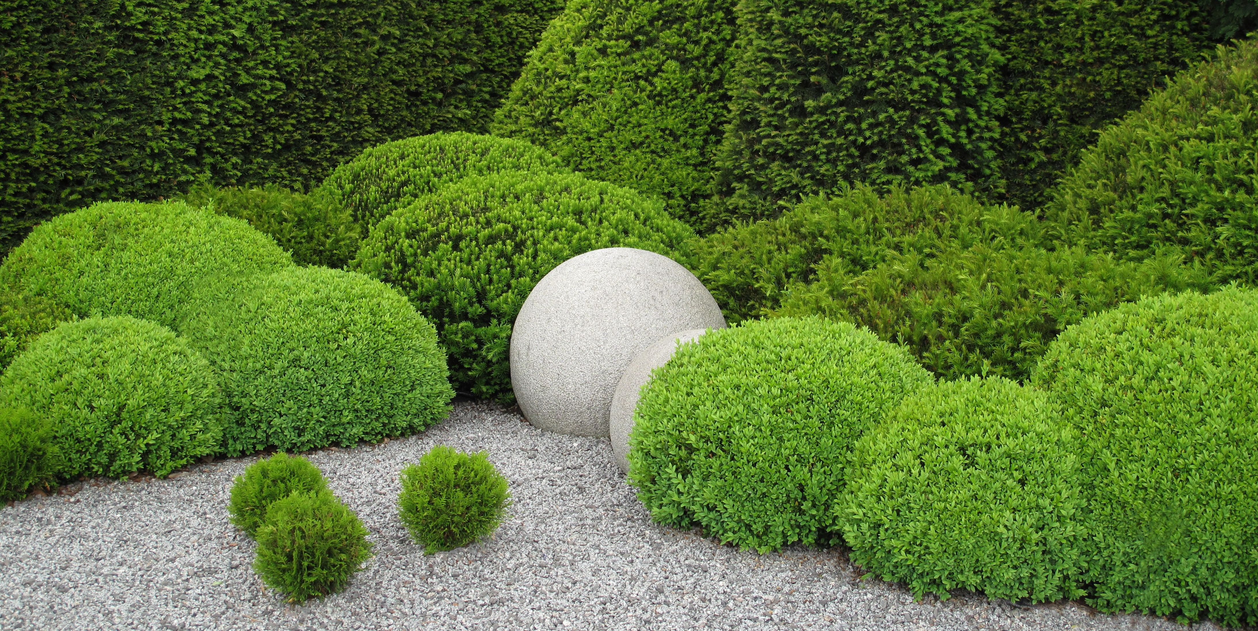 Here's How to Choose the Best Boxwood Shrub for Your Garden
