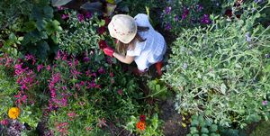 gardener weeding