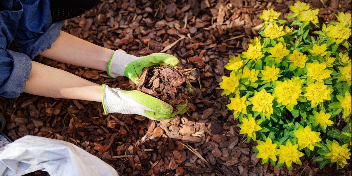 How To Mulch Your Garden 6 Kinds Of Mulch And When To Use Them