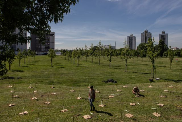 italy's largest urban forestry project