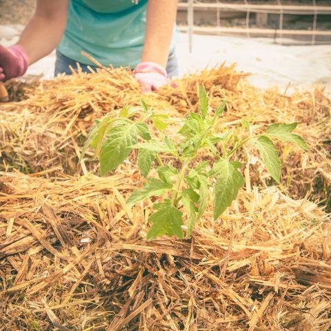 Best Straw Bale Gardening Tips Step By Step Straw Bale Gardening Instructions