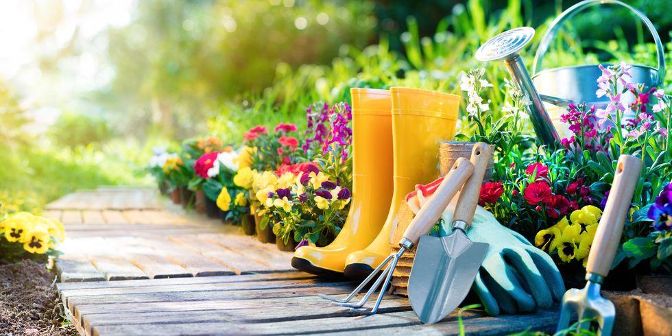How to Start an Organic Garden in 9 Easy Steps