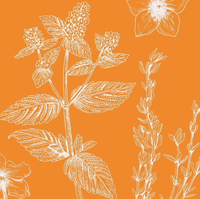 best perennials to grow in your garden