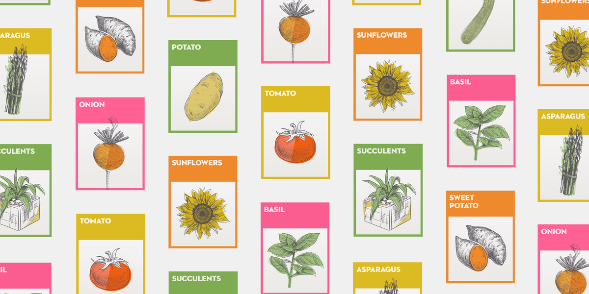 The Ultimate Guide to Gardening for Beginners