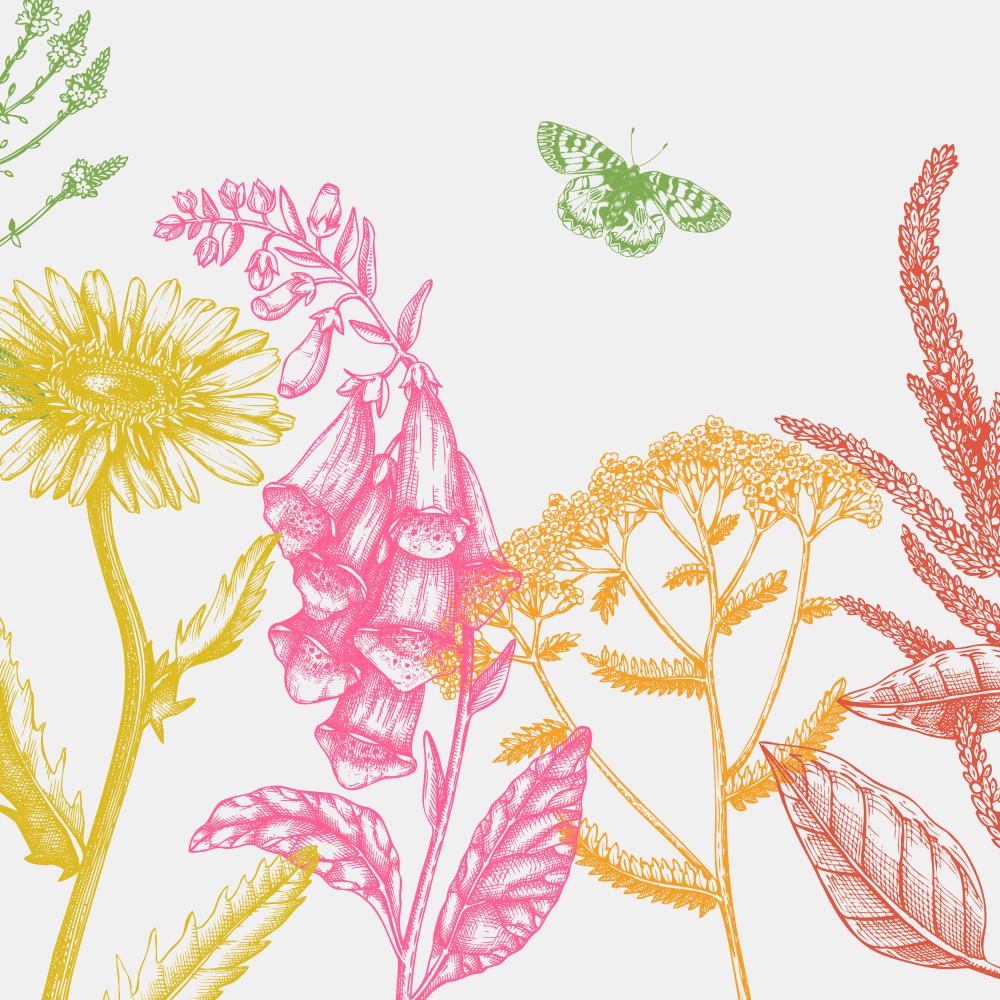 38 best summer flowers beautiful flowers that bloom all summer beautiful flowers that bloom all summer