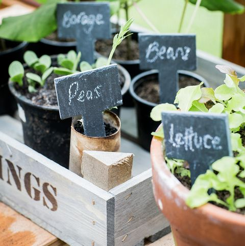 Gardening gift ideas under £35