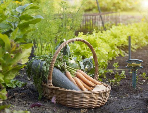 gardening jobs september checklist
