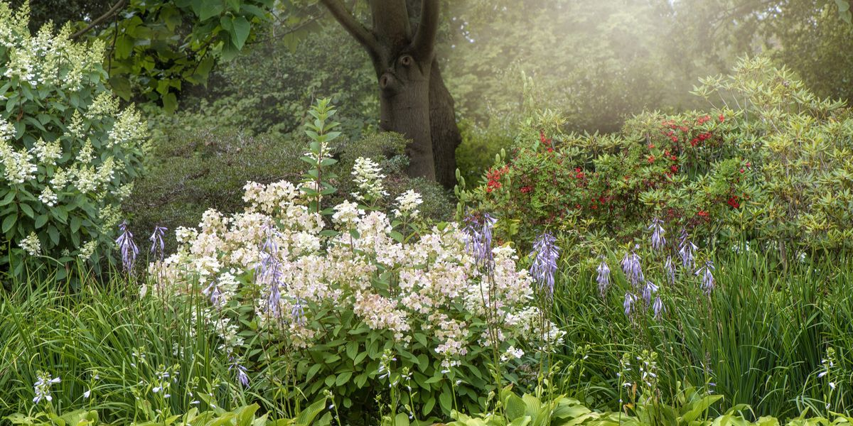 7 essential gardening jobs to do in September