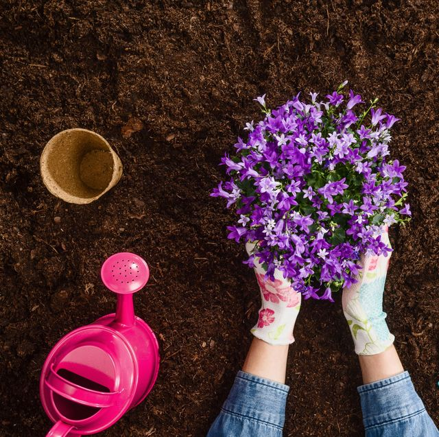 woman holding purple plant with gloves on