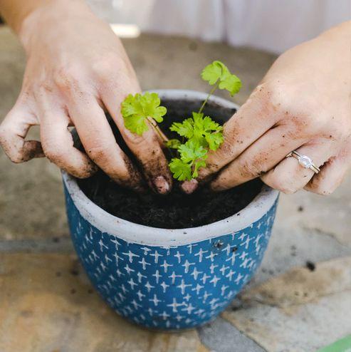 gardening subscription box