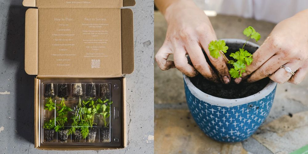 These Gardening Subscription Boxes Send Seeds and Plants Straight to Your Door
