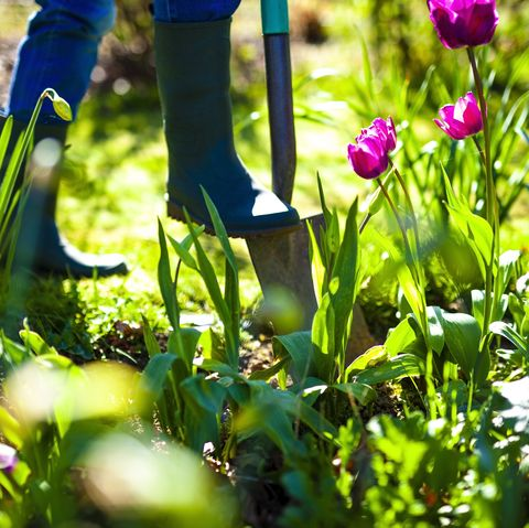 10 expert gardening tips for spring   what to do and plant right now