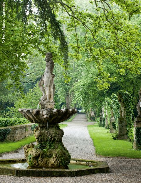 Tree, Nature, Green, Woody plant, Trunk, Statue, Plant, Grass, Garden, Botany,