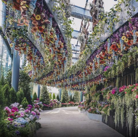 Flower, Plant, Spring, Botany, Garden, Botanical garden, Tree, Architecture, Building, Textile,