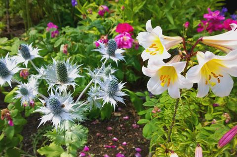 August Gardening To-Do List - Gardening Jobs For August