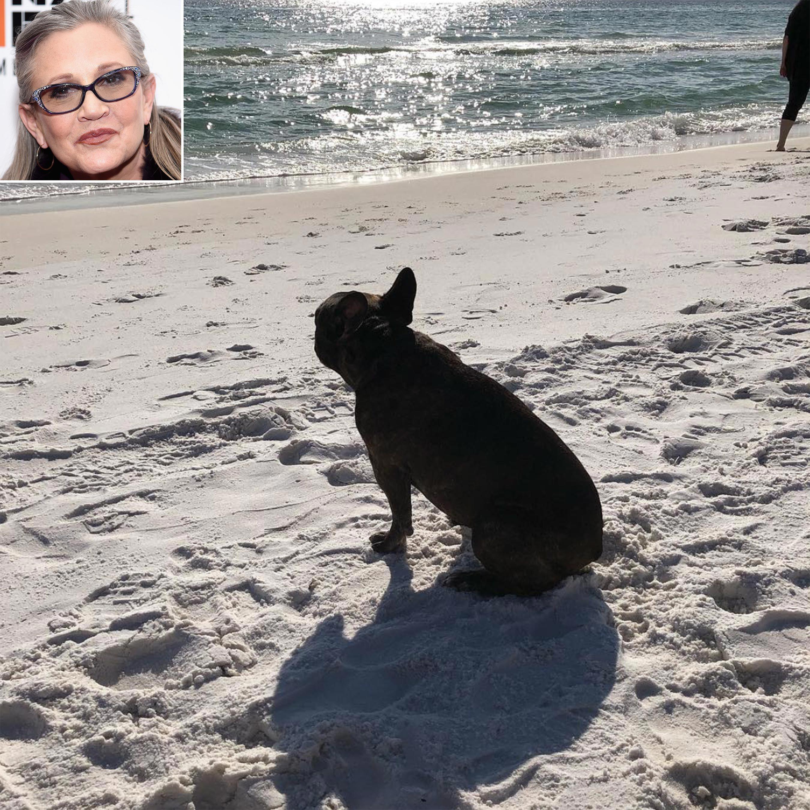 Gary, el perro de Carrie Fisher, se retira a Florida - Star Wars