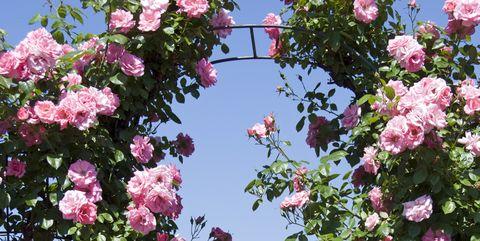 6 Garden Arch Styles To Consider Wooden Garden Arch Metal Garden Arch