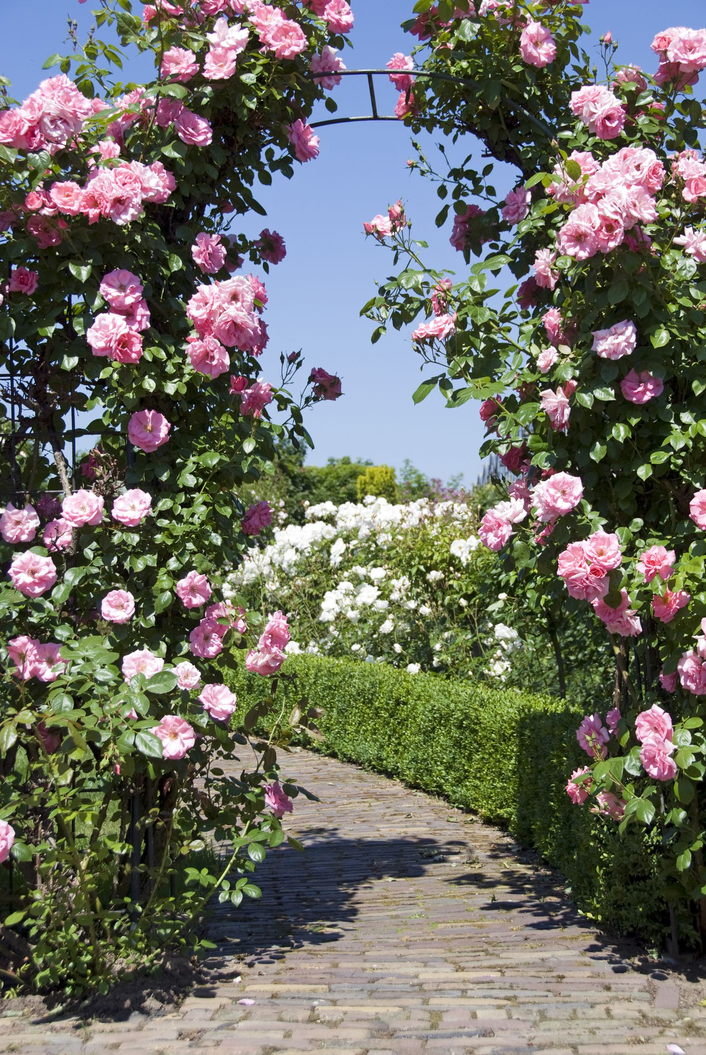 Gate Of Pink Roses   Garden Arch