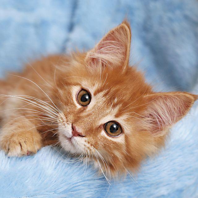 regalos tecno para gatos