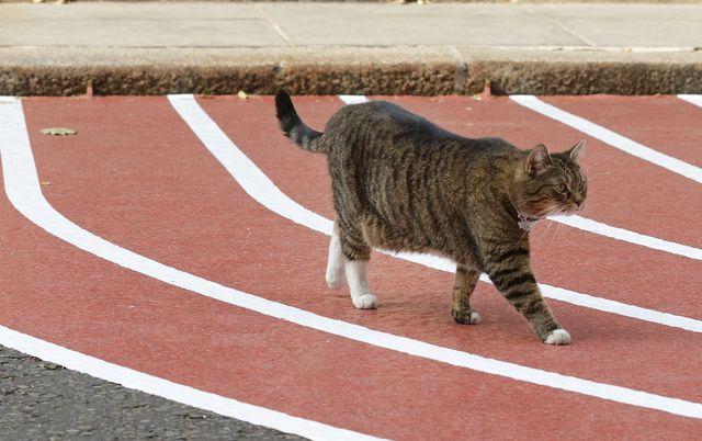 un gato se cruza por delante de una alfombra con forma de pista de atletismo en downing street