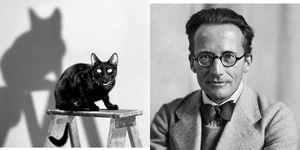gato Schrödinger