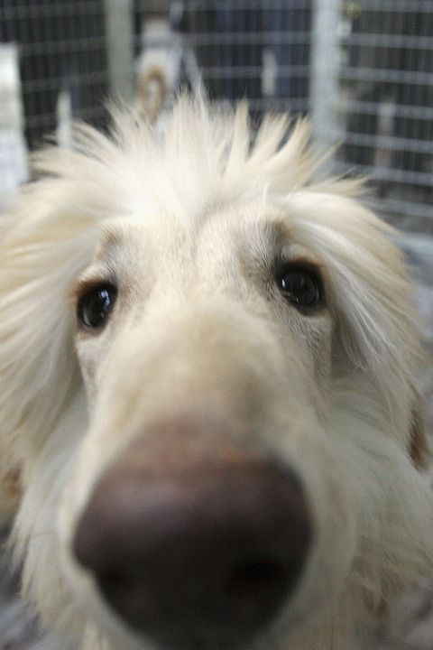 Seoul University Scientists Produce Three Cloned Dogs