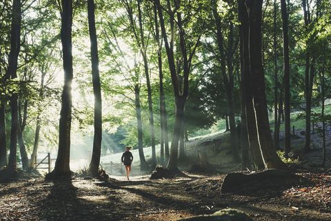 Tree, Forest, Nature, Woodland, Natural environment, Old-growth forest, Natural landscape, Nature reserve, Sunlight, Light,