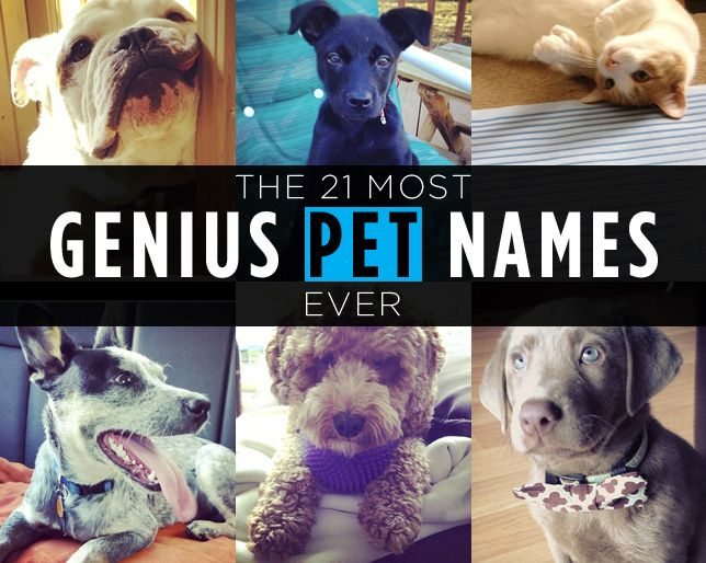 The 21 Most Genius Pet Names Ever