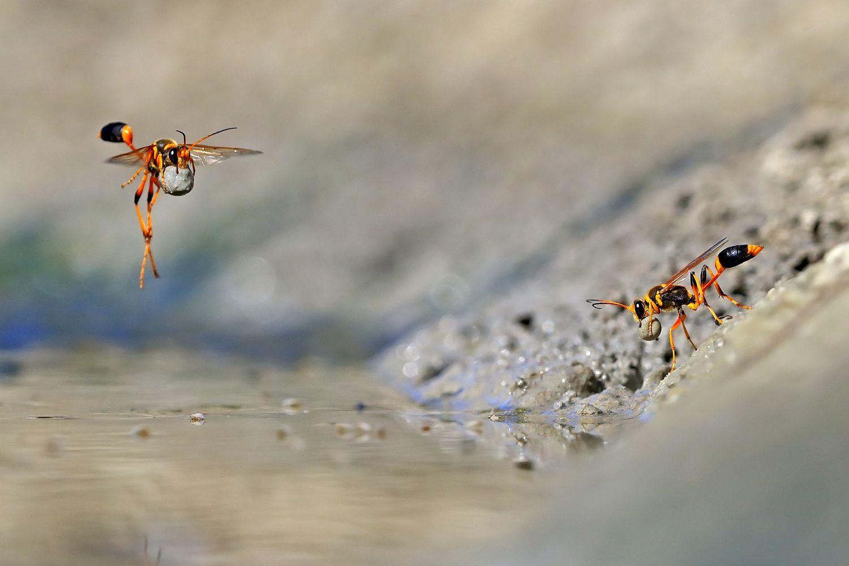 """Las sorprendentes imágenes de los """"Wildlife Photographer of the Year"""""""