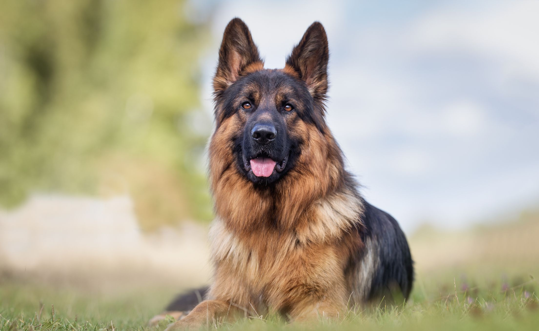45 Best Large Dog Breeds - Top Big Dogs