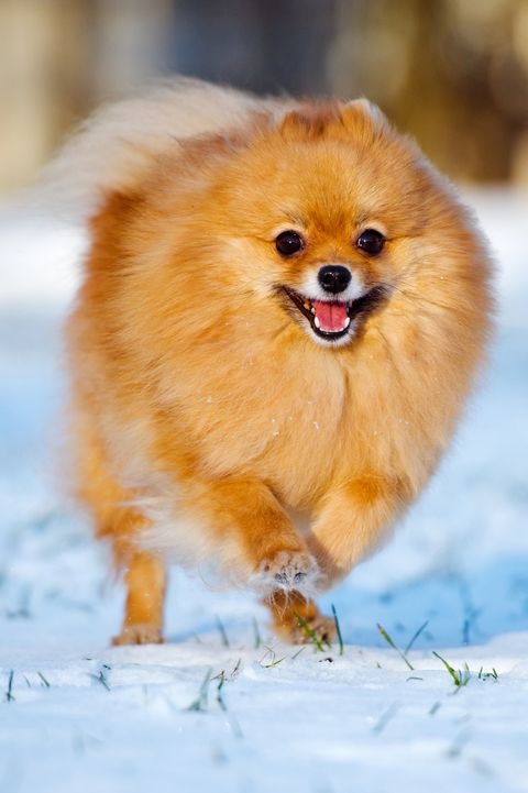 20 Best Small Dog Breeds The Most Popular Small Dogs For