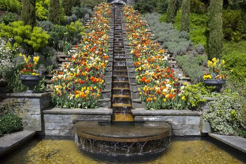 germany, baden wuerttemberg, mainau, blooming tulips at water stairs
