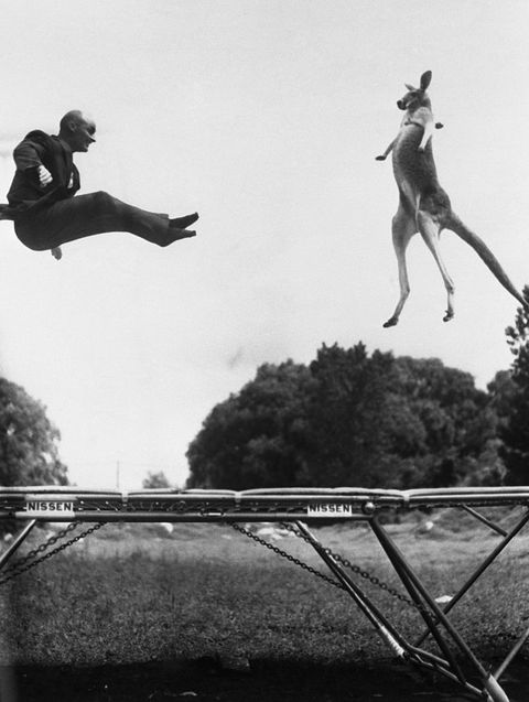 george nissen inventor of the trampoline, stages a photo op of himself bouncing with a kangaroo as a publicity stunt
