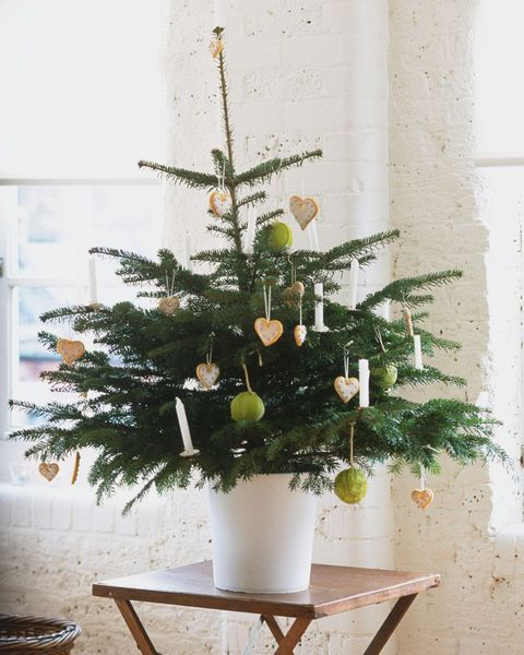 Elegant Christmas Themes: 10 Lovely Christmas Tree Theme Ideas