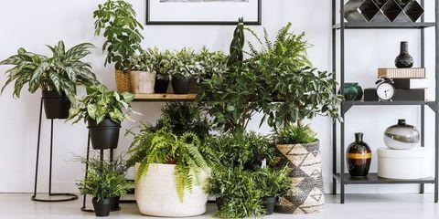 Flowerpot, Houseplant, Plant, Flower, Herb, Room, Fines herbes, Grass, Tree, Shelf,