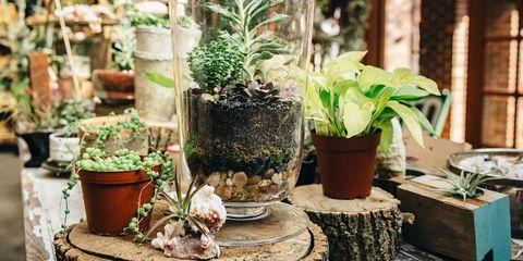 Flowerpot, Flower, Houseplant, Plant, Herb, Room, Garden, Vascular plant, Moss, Floristry,