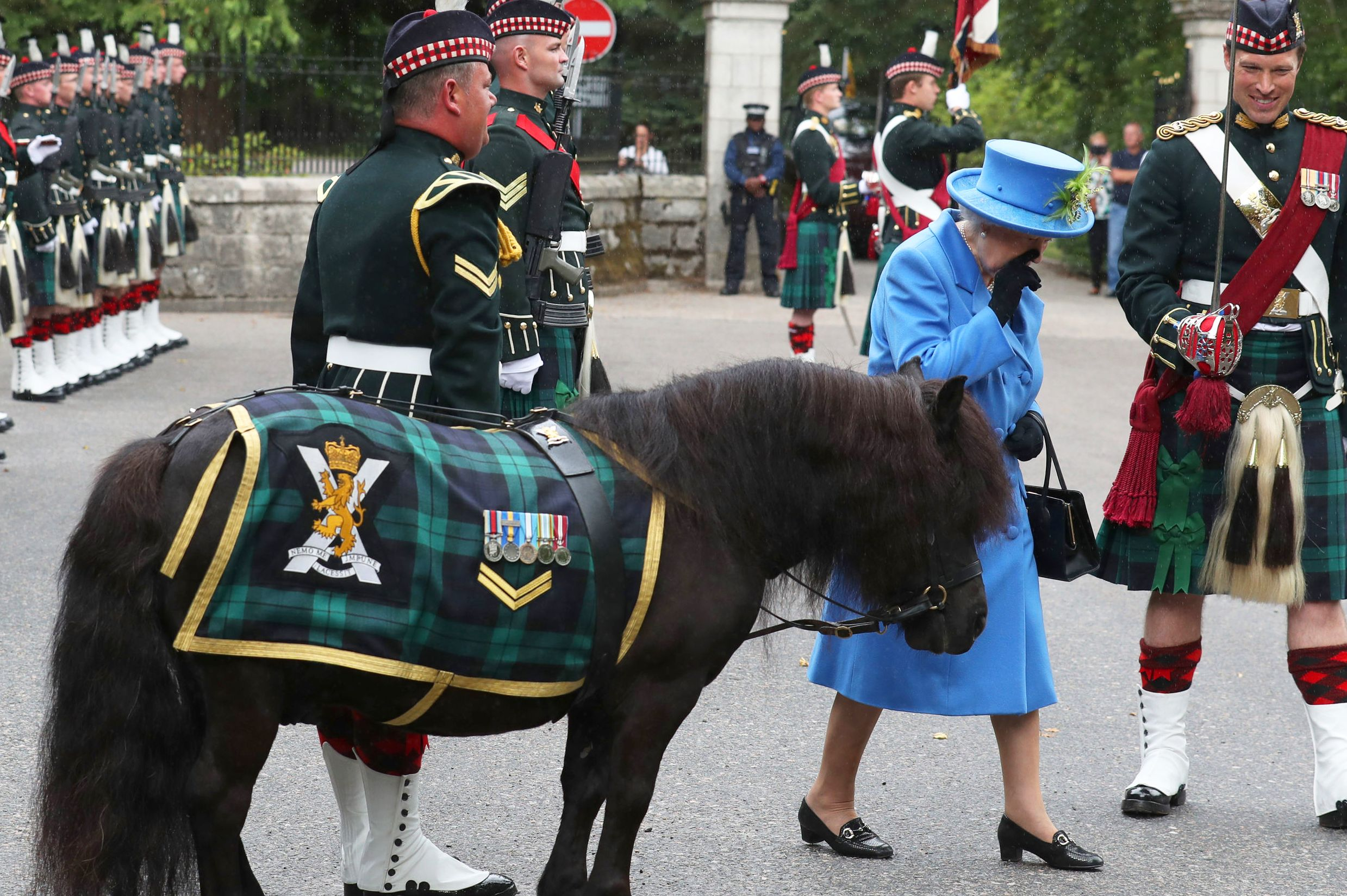 Image result for queen elizabeth scottish pony