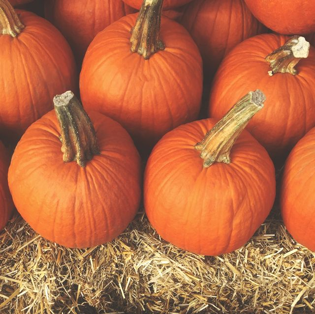 20 Best Fall Harvest Festivals and Events Across America