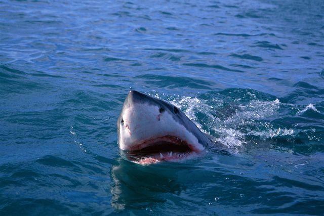 video squalo in porto
