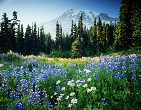 Wildflower fields spring flowers canada to california spring flowers mightylinksfo