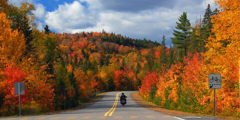 Tree, Sky, Leaf, Nature, Natural landscape, Autumn, Road, Natural environment, Wilderness, Woody plant,
