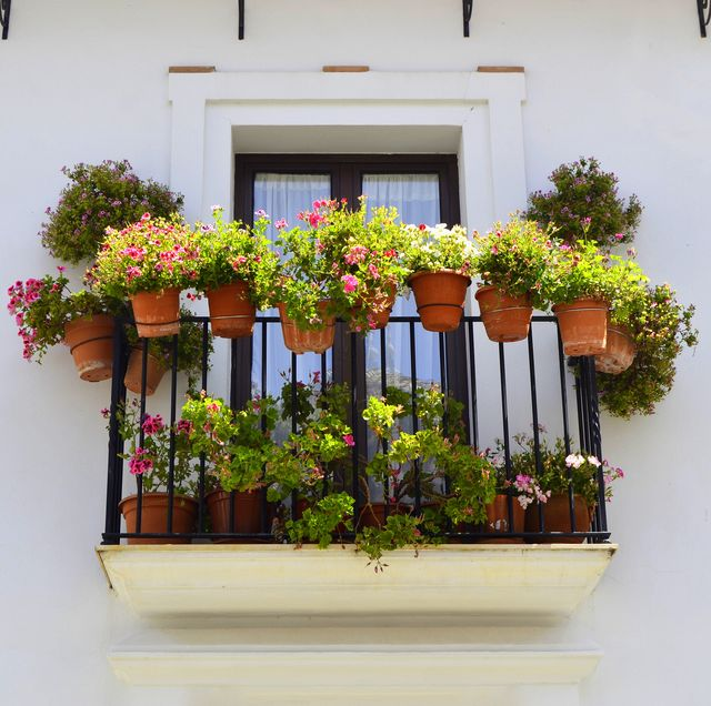 The Best Balcony Plants to Jazz up Your Outdoor Area