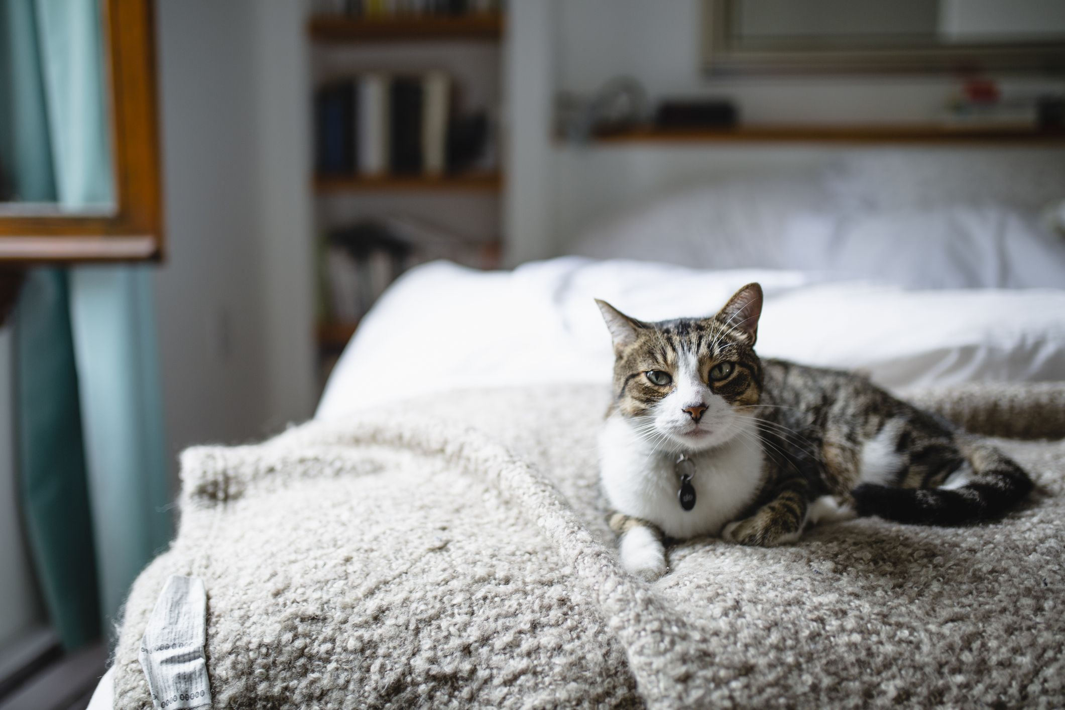 A Study Conducted Over 10 Years Says Letting Your Cat Sleep in Your Bed May Be Good for Your Health